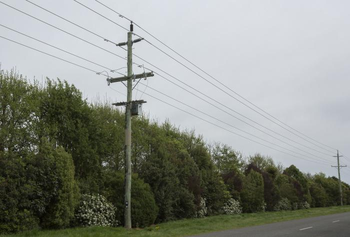 Planting Trees Around Power Lines : Native plantings cropped
